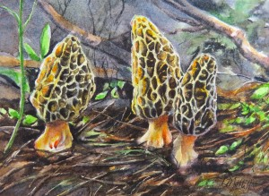 """Mysterious Morels"""
